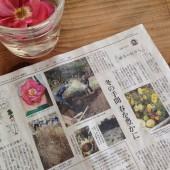 yomiuri1312