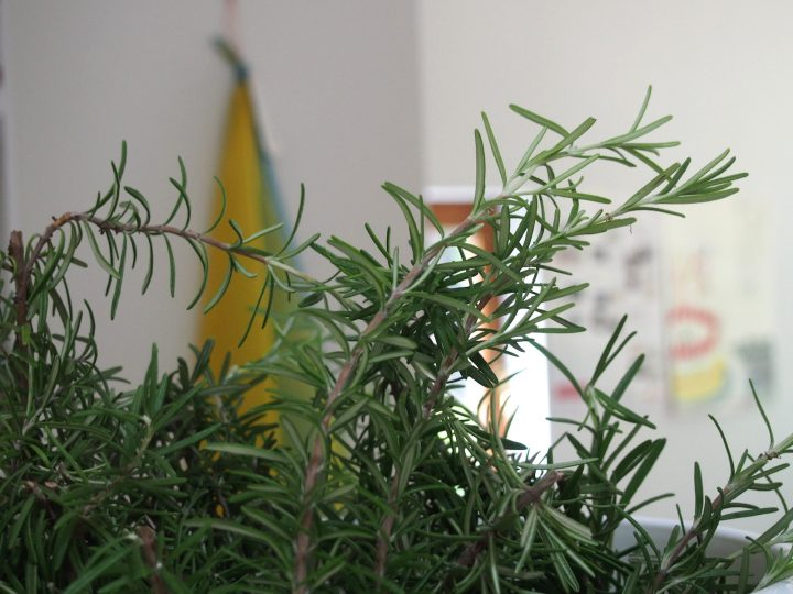 rosemary color3